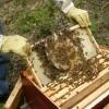 Arıların Ekonomiye Katkısı