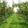 Meyve Bahçesi Kurmak