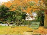 yapraklardan boya uretmek
