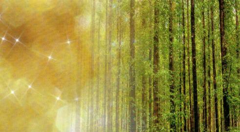 okaliptus agaci