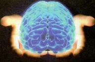 beyni