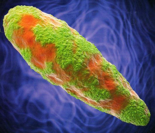dedektif mikroplar