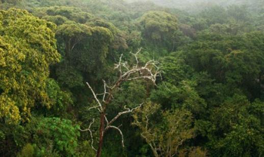 yagmur ormanlari