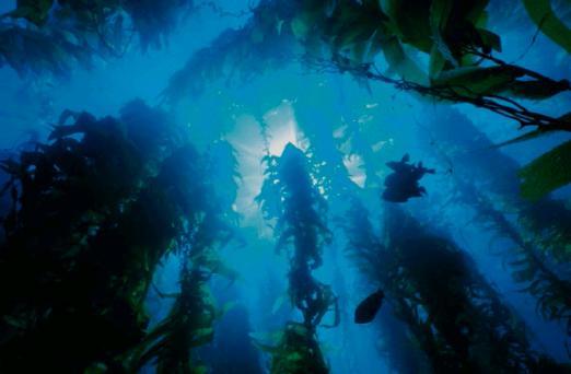 su alti bitkileri