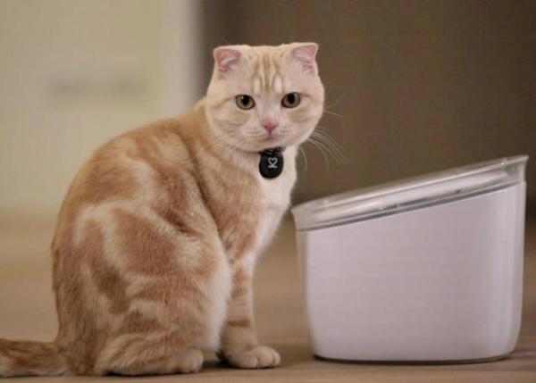 Kediniz İçin Akıllı Çeşme