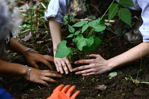 Organik tohum ve eğitim