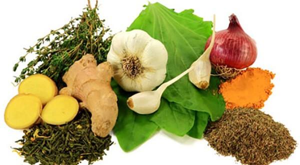 bitkisel antibiyotik