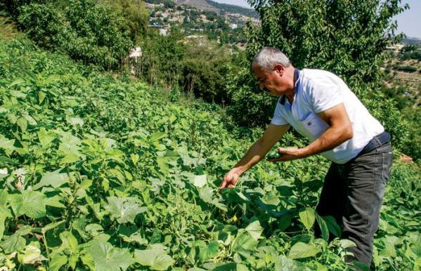 Bitkisel Tarım İlaçları