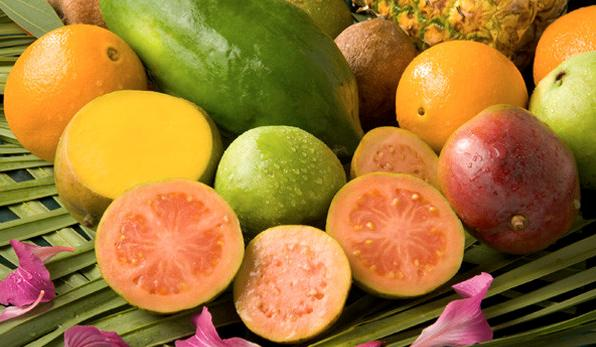 guava-tarimi